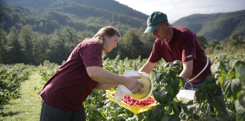 Agriculture In Bosnia And Herzegovina